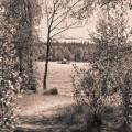 Vid Nydalasjön, Umeå.