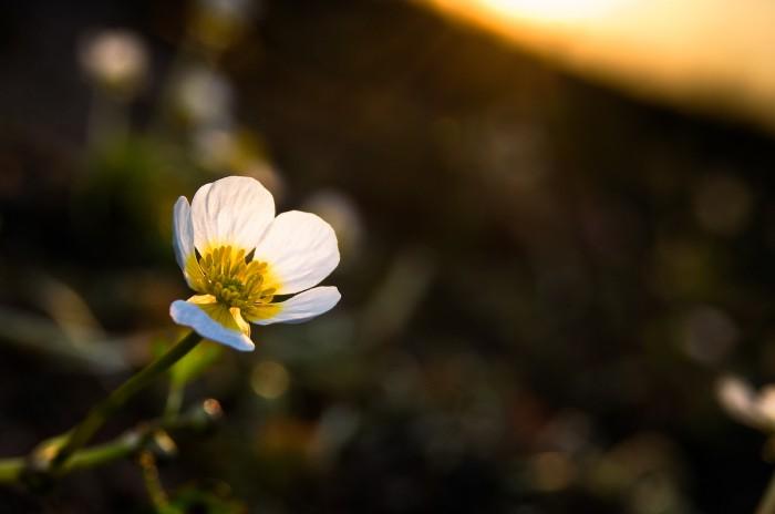 Blomma, Bälinge © Fotograf Lars-Göran Norlin