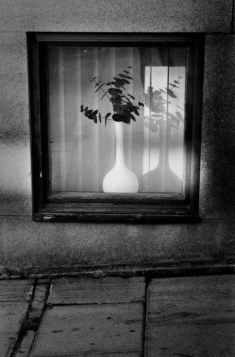 Fönster med blomma, Nygatan Luleå.