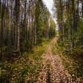 Stig i skogen.